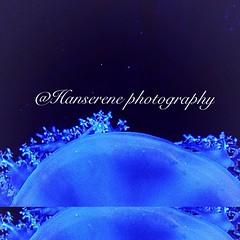 jelly fish upclose (Hanserene) Tags: animals jellyfish magic magical water blue
