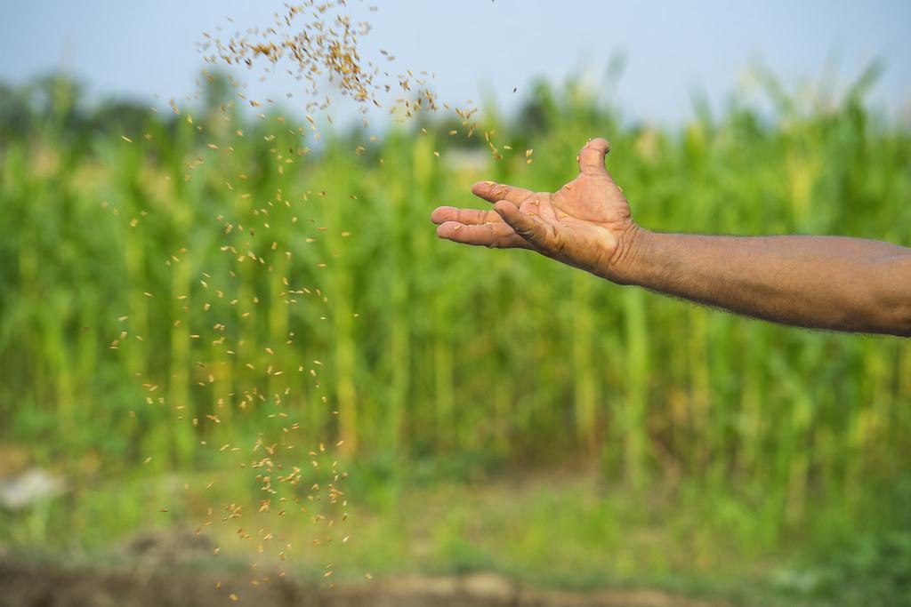 How Advanced Is Kenya S Food Production