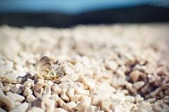 Pearl in the shell (HannahP_92) Tags: pearl shell sea chorvatsko croatia holiday rock rocks bokeh beauty beautiful seashell nature beach