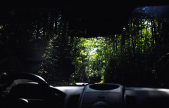 Side (Nicol Parenti) Tags: black white dark green nature road car photography