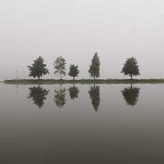 Misty morning (Per Dahlgren) Tags: fog mist morning vsters trees dimma morgon morgondimma pir