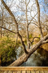 Naked Tree..;) (Jims_photos) Tags: water texas trees outdoor outside adobelightroom adobephotoshop austintexas austintx austin shadows sunnyday daytime hikingintexas hikingtrails jimallen lightroom landscape lakeaustin cloudy clouds creek nopeople