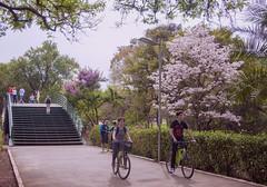 Ibirapuera (Serlunar (tks for 5.0 million views)) Tags: ibirapuera serlunar bike bicicleta ponte