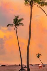 C1_115494-NGA-xx (HamimCHOWDHURY  [Active 01 Feb 2016 ]) Tags: canon hddc1 2014 mar 7d gitzotripod novoflexnqballhead framebangladesh hamimchowdhury lexar professional sunset kuakata palmtree