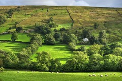 Dentdale, Yorkshire Dales (Explored) (Baz Richardson (now away for a few days)) Tags: cumbria dentdale yorkshiredalesnationalpark sheep sheepgrazing trees explored