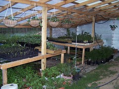 Building_Greenhouse_42809