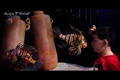 Mystic Aquarium Connecticut (Ronaldo F Cabuhat) Tags: canon connecticut ct lionfish mysticconnecticut mysticaquarium canonef24105mmf4isusm canonspeedlite580exii canoneos5dmarkii mysticaquariumconnecticut cabuhat