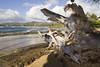 kauai beach (kanoafotos) Tags: kauaibeach