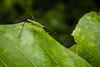 Green (Jineshu) Tags: borivalinationalpark dpsgreen