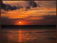 Wadden Sea Sunset with Seagull ( near Harlingen / NL ) (Vriendelijkheid kost geen geld) Tags: sunset waddenzee zonsondergang