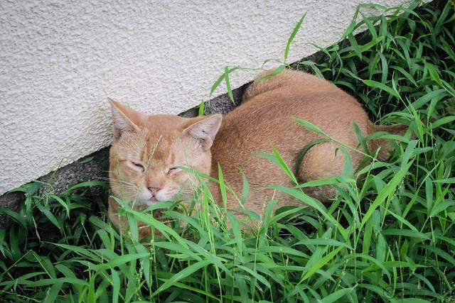 Today's Cat@2012-09-08