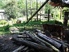 Chessington Zoo (ThemeParkMedia) Tags: world uk tourism zoo united kingdom resort merlin roller rides adventures excitement coaster chessington entertainments