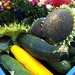 Zucchini and sunflowers