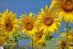 1Day-trip-Jim-Thompson-Farm&Dasada-Gallery_E12663461-029