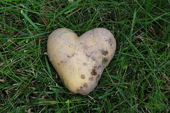 The world's most beloved potato (ADesign13) Tags: love nature potato romantic naturistic