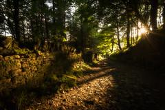 The dog Walkers (dannyhow2011) Tags: digley walkers sunset golden light shadows woodland forest holmfirth huddersfield kirklees holme holmemoss holmevalley landscape nikon nikond810 nikkor1635