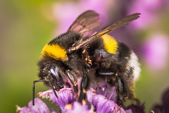Insects (Frank Lammel) Tags: macro insekt 2016 erbach