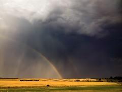 Drama #nokia #lumiavoices #pichitme #nban #natgeo #natural #shotonmylumia #earthofficial #DNG #lumiachallenge (kamenkaludov) Tags: shotonmylumia natural earthofficial lumiavoices nban lumiachallenge natgeo pichitme nokia dng