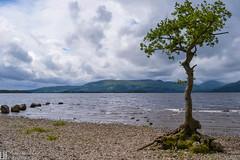 Loch Lomond 013 (louisehay) Tags: loch lochlomond scotland milarrochy hills