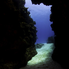 swim through to the blue in Cayman Brac (b.campbell65) Tags: beautiful big blue caribbean caymanbrac coral coralhead dive diving island isolated marine nature ocean reef scuba sea seascape swim tibbets travel tropical underwater water wildlife