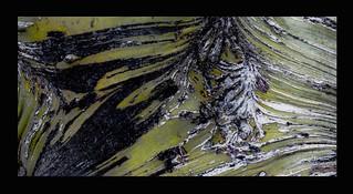 Aug16 Tree skin