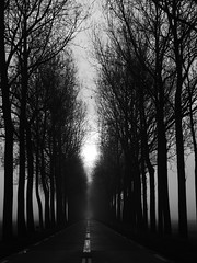 EindeLOOS. (Warmoezenier) Tags: dijk fog landscape mist netherlands road tree weg wit zeeland zwart