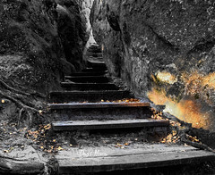 le sentier d'or - the golden path (png nexus) Tags: desaturation gold or escalier stairs rocher rock
