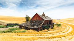 Not Moving On (John Westrock) Tags: endicott washington barn abandoned rural car field farm pacificnorthwest canoneos5dmarkiii canonef1635mmf4lis johnwestrock