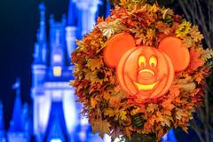 Obligatory - Explored 9/23/16 (MattStemerman) Tags: d750 disneyworld waltdisneyworld mainstreetusa disney magickingdom halloween pumpkin cinderellacastle fall wdw nikon pumpkins