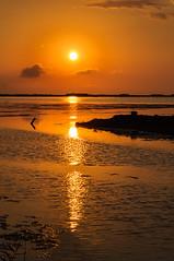 oro del Delta (Santi BF) Tags: delta ebre ebro sol sun sunrise salida