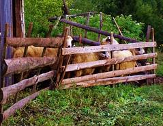 (Valrie Grcevic) Tags: montagne europe lumire couleurs serbie zlatibor ljubis valeriegrcevic valriegrcevic