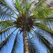 "Angle Palm • <a style=""font-size:0.8em;"" href=""http://www.flickr.com/photos/85288712@N05/7817332204/"" target=""_blank"">View on Flickr</a>"