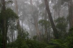 Piper's Lookout - Brown Mountain (Percita) Tags: explore theenchantedcarousel merimbulla2012