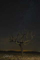 6052 (Javier lamo Andrs) Tags: espaa tree nature stars timelapse spain rboles europe time badajoz estrellas nocturnas lapse extremadura casiopea