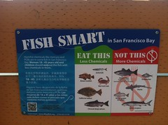 Be Fish Smart (moyalynne) Tags: candlestick candlestickpoint orchestrafornativesofthefuture