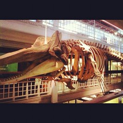 Day 4 - Sperm Whale (akhenatenator) Tags: skeleton worth1000