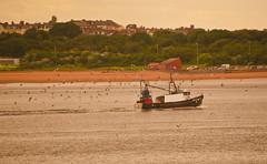 North shields fish quay (markmasters1) Tags: elementsorganizer