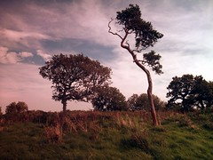 Cadbury Hill (La cervelle en t) Tags: trees somerset ironage hillfort congresbury cadburyhill