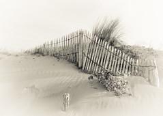 Plage (@lain G) Tags: mer france nature vendee plage paysdelaloire océanatlantique latranche