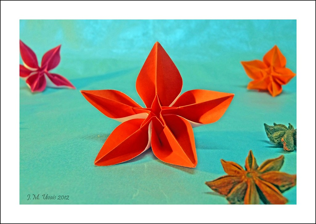 The Worlds Newest Photos Of Carambola And Origami