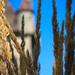 """Château d'Yvoire depuis le jardin des 5 sens - Haute Savoie • <a style=""""font-size:0.8em;"""" href=""""http://www.flickr.com/photos/53131727@N04/7986566824/"""" target=""""_blank"""">View on Flickr</a>"""