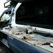 Dia de pescaria em Henties Bay