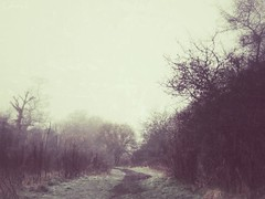 March morning (Electra_star) Tags: morning trees winter england mist nature grass fog landscape birmingham woods frost path branches bleak melancholy sheldoncountrypark