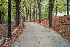 Banyor Region, Hungary (j-riviere) Tags: leica trees nature hungary m8 pathway banyor