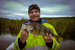 Perch 1420gr 46cm. (Hellacaster) Tags: nature stockholm natur himmel perch sibbo sportfishing catchandrelease abborre sportfiske 1420gr
