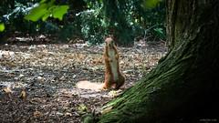 International Cat Day 2016 (urbartho) Tags: animal squirel nature