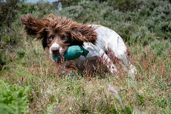 Dog Photography by Gerry Slade-2790 (Photography By Gerry Slade) Tags: dogphotographer gerryslade wwwgerrysladecouk