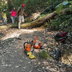 Cleanup Time (LeftCoastKenny) Tags: elcortedemaderacreek elcortedemaderacreektrail trees brush moss hikers chainsaw culvert