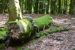 P1020933 (Michael Buch 65) Tags: naturparksaarhunsrück erbeskopf hochwald
