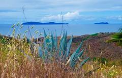 Los Coronados Islands (malcolmharris64) Tags: loscoronados islands pacific ocean sea cacti clouds baja california mexico
